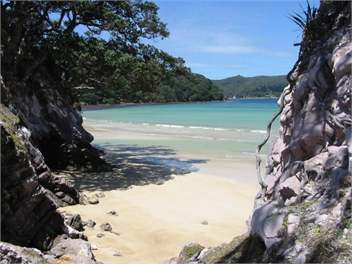 The Tree House · Great Barrier Island ...
